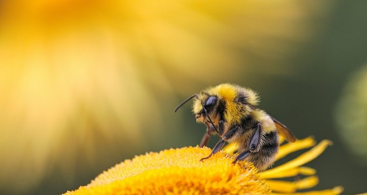 Celebrating the Earth Day with our focus on innovations saving the bees